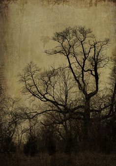 Antiqued Oak @brenda                                                         Just beautiful and how I love my Oak to be all dark and broody sad and wistful looking.