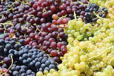 #sunset #sikinos #Sikinosisland #Greece #Island #vacation #oia #Santorini #folegandros #ios #summer #Aegean #Cyclades #weddingideas #decoration #Greecefood #Greecewine #winetourist #greecestagram #travel_greece #loves_greece #ig_greece #igers_greece #greecewine #winesofgreece #instagreece #wine #wines #wineo #vin #vins #vino #sommelier #winetasting #travel Greece Food, Oia Santorini, Greece Travel, Wine Tasting, Weddingideas, Greek, Landscapes, Island, Vacation