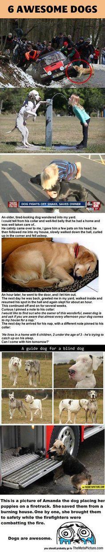 Los perros ayudan a los humanos