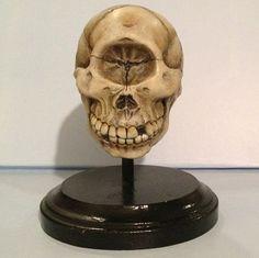 Cyclops Skull Resin Sculpture via Etsy
