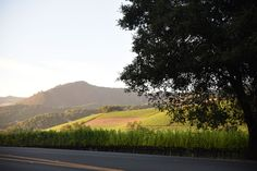 No Whining in Wine Country: A Tour of Sonoma | Just Arrived | FATHOM