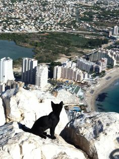 """All this is mine"". Calpe cat enjoys view over her Queendom"