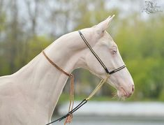 Most people would consider this horse ugly, but I find that I just want to love and kiss this horse.