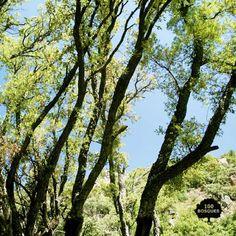 Alcornocal de Sestrica. Situado en la Sierra de la Virgen, en pleno Sistema Ibérico. Es un enclave botánico extraordinariamente singular ya que es el único bosque de este tipo en Aragón y, además, se halla fuera del área de distribución actual del alcornoque en la Península Ibérica. Predominan el alcornoque y la encina o carrasca, aunque aparecen otros árboles como el quejigo y el rebollo.