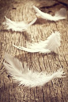 Stepping into the room, white feathers cover the floor, as if you've walked into a dream