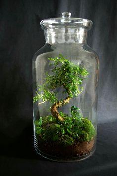 wow amazing mini bonsai terrarium garten garten pflanzen und bonsai baum. Black Bedroom Furniture Sets. Home Design Ideas