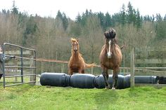 Another example of obstacles on a track from the Horses for Clean Water site. A great resource for reducing the environmental impact of keeping horses.