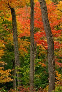 ~~Autumn in Gatineau Park, Ottawa, Canada by Younes Bounhar~~