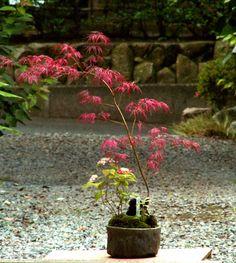 翠古園(すいこえん) 山野草や寄せ植え園芸 の専門店 l ミニ ガーデニング 花翠の 和風 盆栽の世界へようこそ