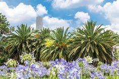 """Com certeza é o parque mais famoso da cidade de #SãoPaulo e o mais importante da cidade. O Parque do #Ibirapuera ou """"Ibira"""", como muitos paulistanos o chamam, foi inauguro em 1954 para a comemoração do quarto centenário da cidade. É superado em tamanho apenas pelo Parque do Carmo e pelo Parque Anhanguera. Confira no blog: http://blog.bestday.com.br/pulmao-verde-da-cidade-de-sao-paulo-parque-ibirapuera/"""