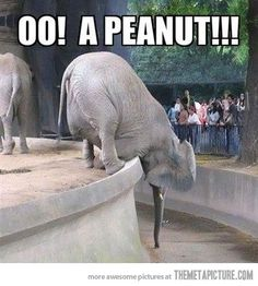 nothing will stop him from getting that peanut..