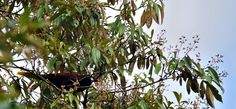 Bird, Costa Rica, Animals, Tortugero, Wildlife.