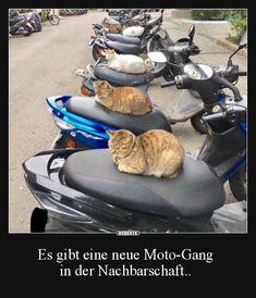 Es gibt eine neue Moto-Gang in der Nachbarschaft.. | Lustige Bilder, Sprüche, Witze, echt lustig