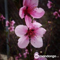 Ja es Primavera a Mandongo.cat