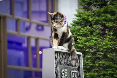 Ginza Cat by specialoperations, via Flickr