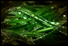 Simple beauty of water drops on wild grass