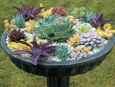 use a bird bath to grow succulents