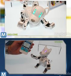 This Robot Dog Will Steal Your Heart [VIDEO]