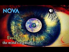 Evolução - O Big Bag da mente/Evolution - The Mind's Big Bang