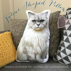 "Debbie Hawkins on Instagram: ""One for all you Fabulous Feline Lovers. Give a cat lover a purrrr-fect gift with one of our Custom shaped photo pillows #feline…"" Customised Gifts, Personalised Gifts, Cat Lover Gifts, Cat Lovers, Gifts For Work Colleagues, Cuddle Pillow, Memory Pillows, Photo Pillows, Animal Pillows"