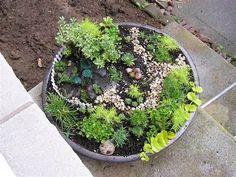 Miniature Garden Plant Id???