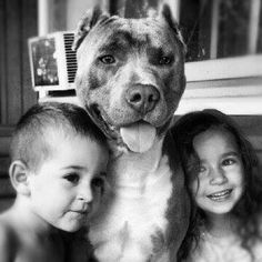Pitbulls are family. I wish it didn't have it's ears clipped☹️