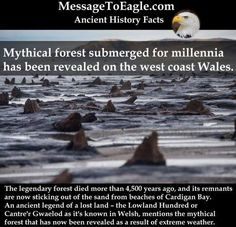 Amazing Mythical Forest Submerged For Millennia - Now Revealed On The West Coast Wales Ancient History Facts: Mythical forest submerged for millennia has been revealed on the west coast Wales History Of Wine, Mystery Of History, Places To See, Places To Travel, Wtf Fun Facts, Crazy Facts, Random Facts, History Facts, Oral History