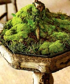 Mini moss garden.  I want to make one like this!  It would especially like the shady/semi shady setting of Collie Capers, our house on the outskirts of a fairly large city in the PacNW.