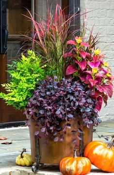 Get ready for Fall containers - Purple Pixie® Loropetalum, 'Lemon Lime' Nandina,, 'Fireworks' Pennisetum, & 'Alabama Sunset' Coleus. Fall Planters, Outdoor Planters, Fall Potted Plants, Autumn Planter Ideas, Front Porch Planters, Concrete Planters, Ceramic Planters, Ceramic Bowls, Planter Pots
