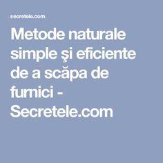 Metode naturale simple şi eficiente de a scăpa de furnici - Secretele.com Experiment, Good To Know, Diy And Crafts, Home And Garden, Cleaning, Gardens, Houses, The Body, Plant