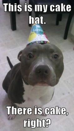Happy Birthday Pitbull, Funny Happy Birthday Wishes, Happy Birthday Sister, Happy Birthday Images, Dog Birthday, Birthday Greetings, Birthday Memes, Birthday Pins, Birthday Cards