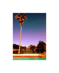 picture of palm trees indigo lavender sky by Lori Licker on Etsy, $15.00