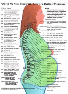 @Carissa from {Carissa Miss} Small - for your sciatic nerve -Choose Pre-Natal Chiropractic Care for a Healthier Pregnancy!