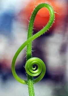 Nature is full of Music