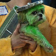 Oscar the Grouch Costume (Dog) or Humans