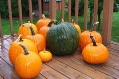 Pumpkin Colors : orange, white, blue, red pumpkins