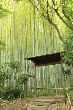 5月。白藤といえば「英勝寺」武家の古都「鎌倉」にあって創建は江戸時代(1636年)という、ここ『英勝寺』。徳川家康の側室であった「お勝の方」が、家康の死後出家して「英勝院」となり、その「英勝院」が開基。先祖供養・自身の後生を祈るために建てられたお寺。現在では鎌倉地区唯一の尼寺です。※仏殿内にある御本尊、阿弥陀三尊像は徳川家光より寄進されたもの。境内では一年中様々な花が咲き、5月上旬には珍しい白い藤が楽しめる。また、竹の寺「報国寺」にも劣らない竹庭も見所。鎌倉駅から徒歩圏内だが訪れる人も多くはなく、ゆったりと鎌倉の風情を楽しむにはお勧めのお寺です。名称:東光山英勝寺宗派:浄土宗本尊:阿弥陀三尊像(徳川家光より寄進)住所:鎌倉市扇ガ谷1-16-3拝観料:大人300円、高校生200円、小中学生100円、乳幼児0円。拝観時間:9:00〜16:00【アクセス】鎌倉駅西口より徒歩12分。