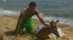 Fishermen rescue deer swimming in Long Island Sound