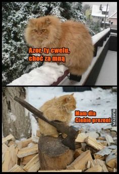 Funny Chicken Memes, Chicken Humor, Polish Memes, Weekend Humor, Funny Mems, Lol, Wtf Funny, Cat Memes, Funny Animals
