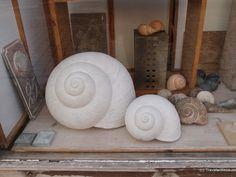 Snail shells in a shop in Naumburg (Saale), Germany Saxony Anhalt, Snail Shell, Shells, Germany, Throw Pillows, Shopping, Shelled, Cushions, Deutsch