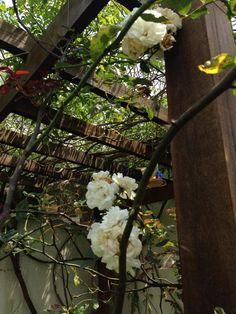 Meu jardim no Brasil/ casa ds Corujas <3