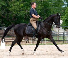 Stallion Helm [Melesur-Hanbibi] El line. Ridden by W. Askins. Bred by T. Pontecorvo.