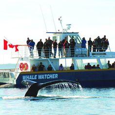 Whale watching, New Brunswick, Canada- BUCKET LIST