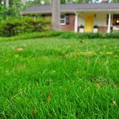 Filling a bare grass spot