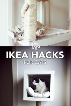 cat furniture Whether youre trying to hide an unsightly litter box or just create a kitty playground that isnt totally ugly (and doesnt cost a billion dollars), theres something here for you in this roundup of 7 DIY clever cat-centric IKEA hacks. Ikea Hacks For Cats, Cat Hacks, Hacks Diy, Hacks Ikea, Ikea Cat, Diy Cat Tree, Pet Furniture, Barbie Furniture, Garden Furniture