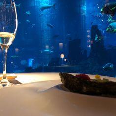 Ossiano, Dubaï - Restaurant Avis, Numéro de Téléphone & Photos - TripAdvisor Dubai Aquarium, Restaurants, Trip Advisor, Photos, Pictures, Restaurant