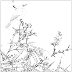 Photo Life Journal, Chinese Art, Asian Art, Line Art, Embroidery Patterns, Coloring Pages, Sketches, Birds, Drawings