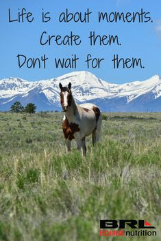 Life is about moments. Create them. Life is about moments. Create them. Rodeo Quotes, Equine Quotes, Cowboy Quotes, Cowgirl Quote, Equestrian Quotes, Equestrian Problems, Horse Sayings, Hunting Quotes, Cute Horses