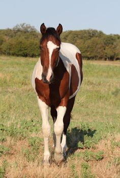 curly horse when i win the lotto