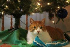 Lost Cat - Tabby - Brampton, ON, Canada L6Z 3H2